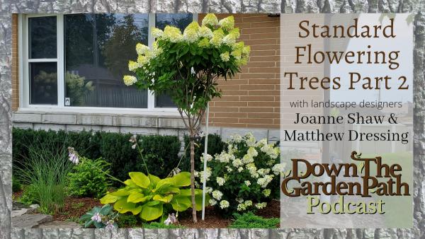 standard flowering trees part 2