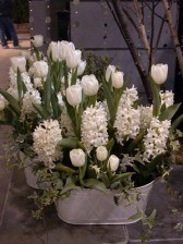 All White Tulips and Hyacinth