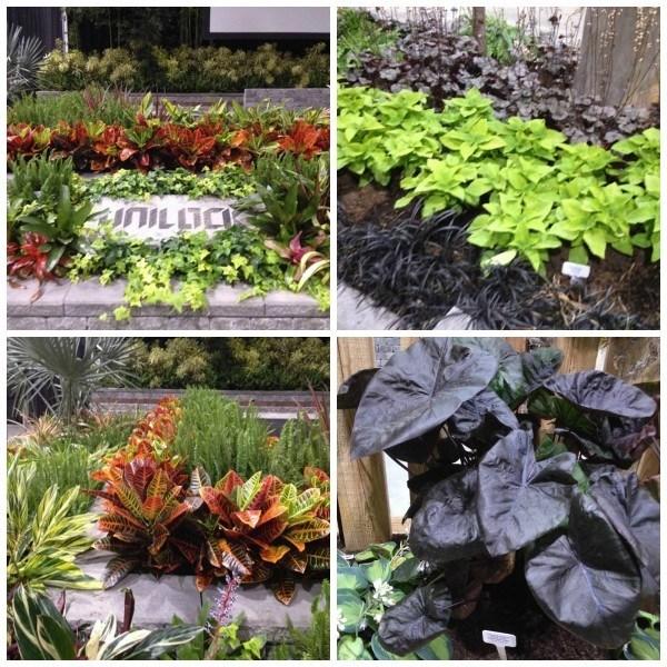 colour themed gardens