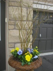 Curly Willow Stems and Pansies