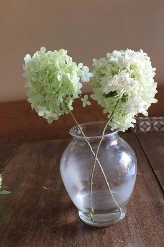 Hydrangeas When They Dont Work And What You Can Do About It Down