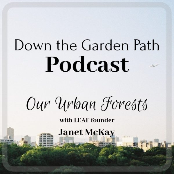 Our Urban Forests
