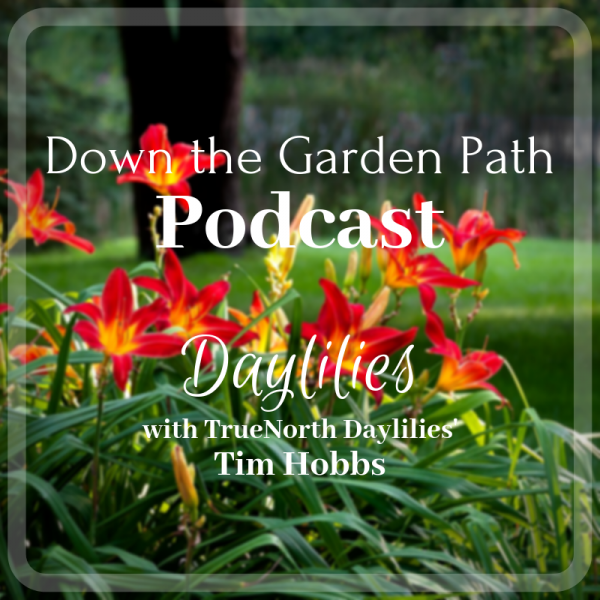 Down the Garden Path Podcast image of daylilies