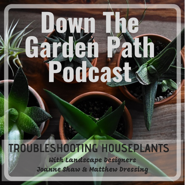 troubleshooting house plants
