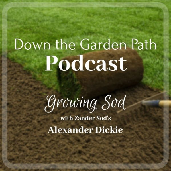 Growing Sod
