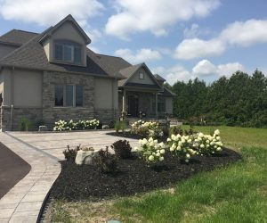 Landscape Projects - Front yard