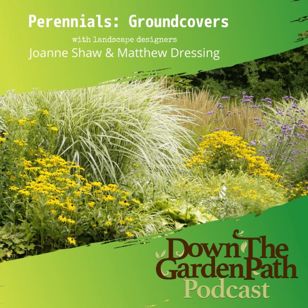 perennial groundcover