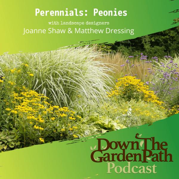 perennials peonies