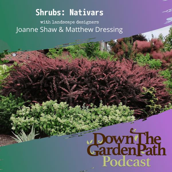 Shrubs - Nativars