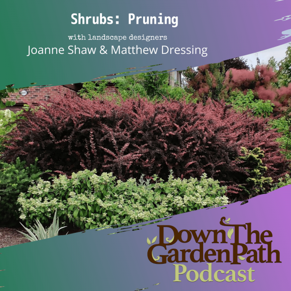 shrubs pruning