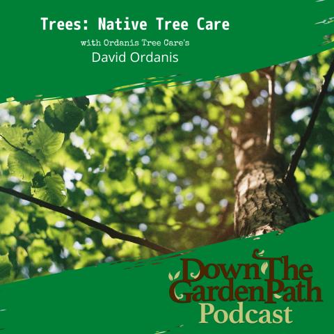 native tree care