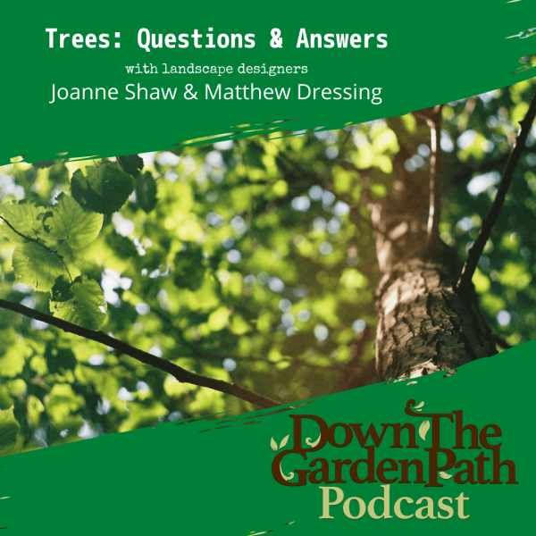 trees q & a with Joanne and Matt