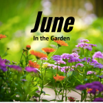 June in the Garden