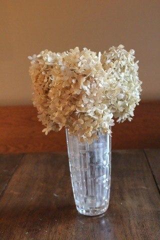 Limelight hydrangea dried