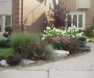 Portfolio : Front garden - no grass
