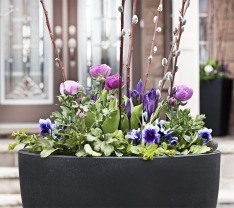 Pussy Willow Stems, Purple Pansies and Irises