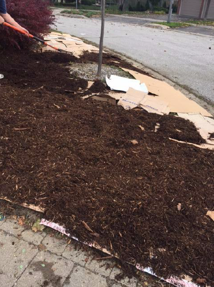 Mulch covering cardboard around a tree.