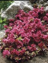 Sedum Dragons Blood - also great in hot spot with nice red colour.