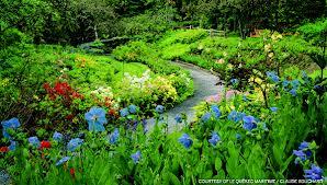 Blue Poppy Glade garden