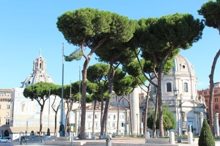 Trees in Italy