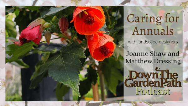 Caring for annuals