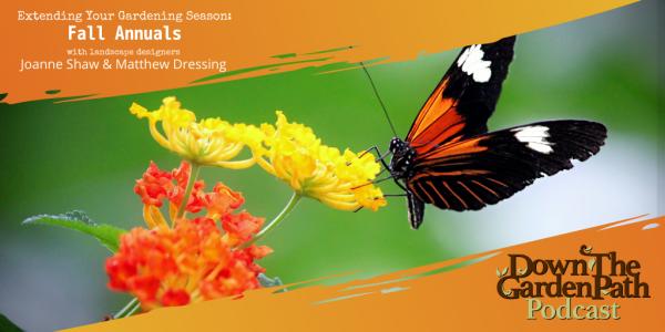 Extend the season - Fall Annuals