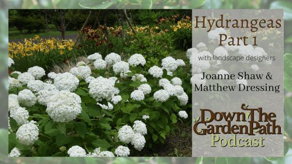 Hydrangeas Part 1