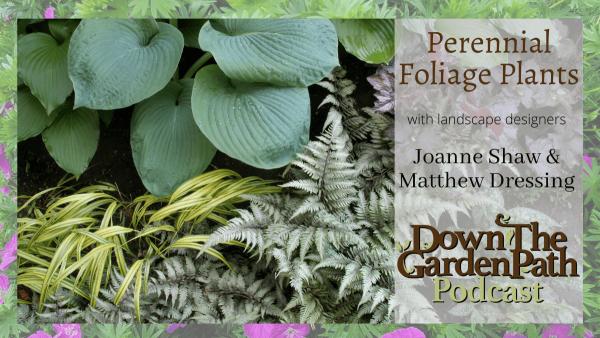 Perennials Foliage Plants
