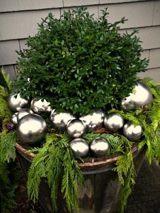 Boxwood Winter Container