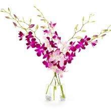 cut orchid
