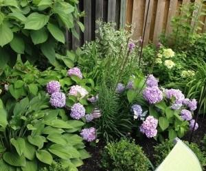 Garden today.