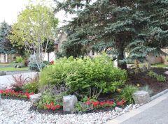 Front yard garden under and around large blue spruce.