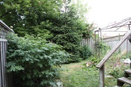 over grown backyard