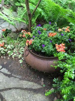 shady corner planter short