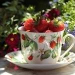 strawberries teacup