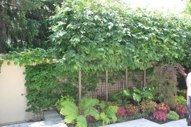 tree hedge