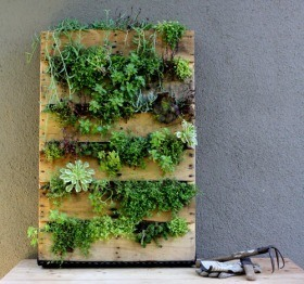 Repurposing a wooden pallet into a vertical garden for that sunny spot in your yard.