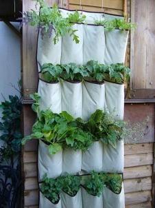 A quick and easy veggie garden.